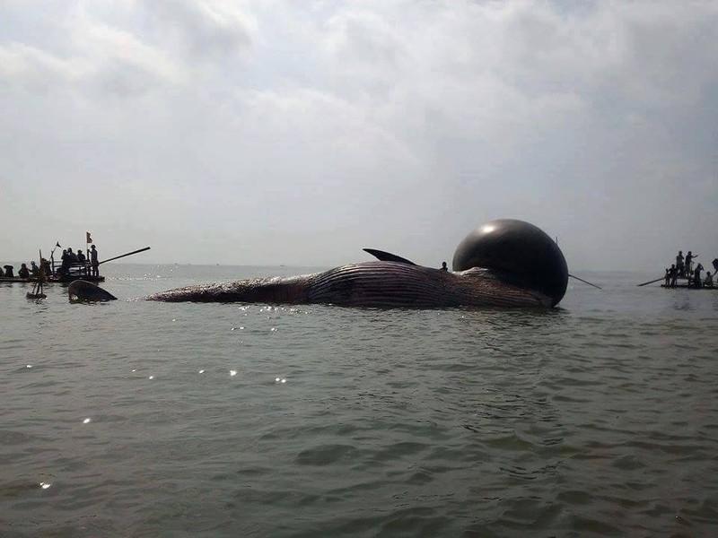 Người dân rưng rưng chờ đưa xác cá voi lên bờ - ảnh 2