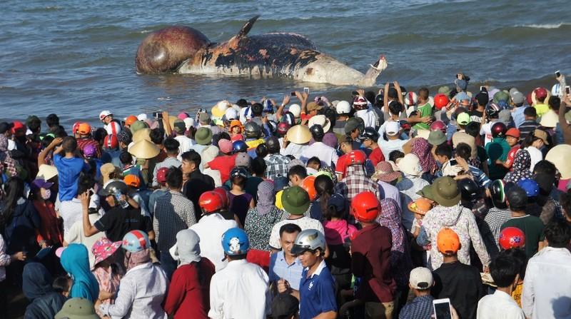 Cả làng mang khăn tang trong lễ an táng cá voi - ảnh 1