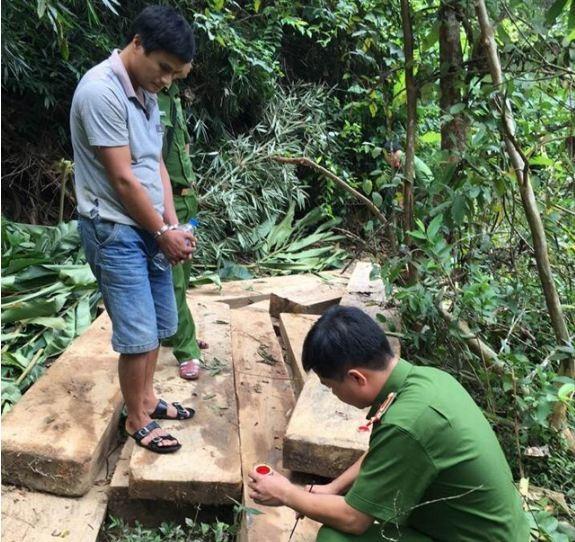 Nghi can Cường bị bắt giữ cùng số gỗ rừng khai thác trái phép. Ảnh: CTV