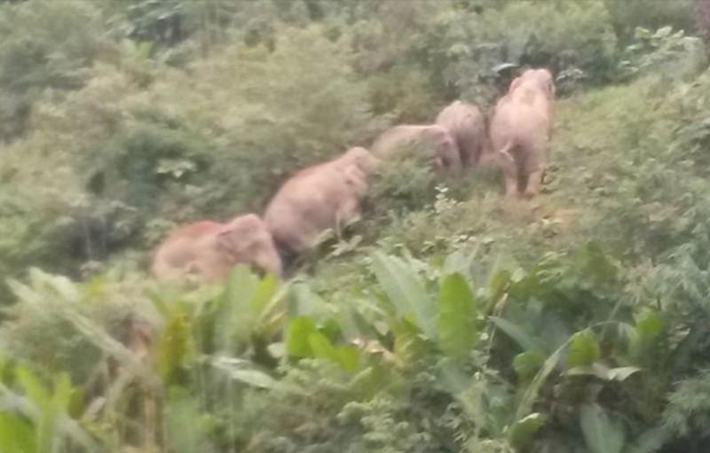 6 voi rừng kéo về quậy phá, dân lo lắng - ảnh 1