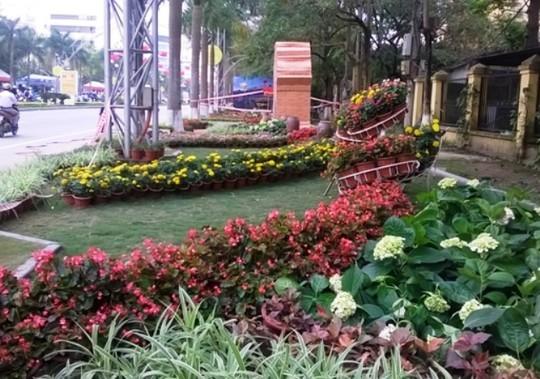Muôn hoa đua sắc ở đường hoa
