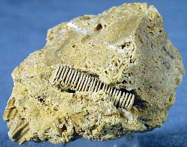 Phát hiện hóa thạch gây tranh cãi: Người ngoài hành tinh hay sinh vật biển? - ảnh 1
