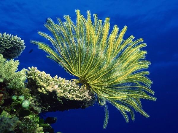 Phát hiện hóa thạch gây tranh cãi: Người ngoài hành tinh hay sinh vật biển? - ảnh 4