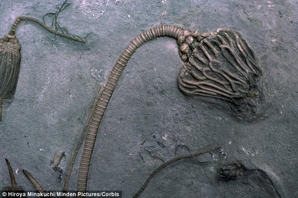 Phát hiện hóa thạch gây tranh cãi: Người ngoài hành tinh hay sinh vật biển? - ảnh 5