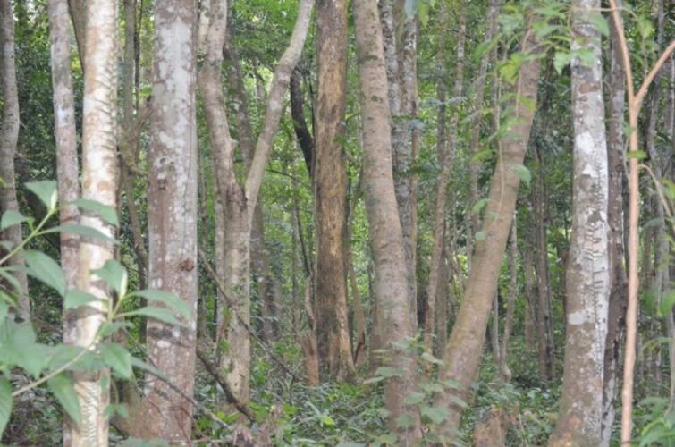 VQG Phong Nha-Kẻ Bàng khai trương điểm du lịch sinh thái rộng 40ha - ảnh 3