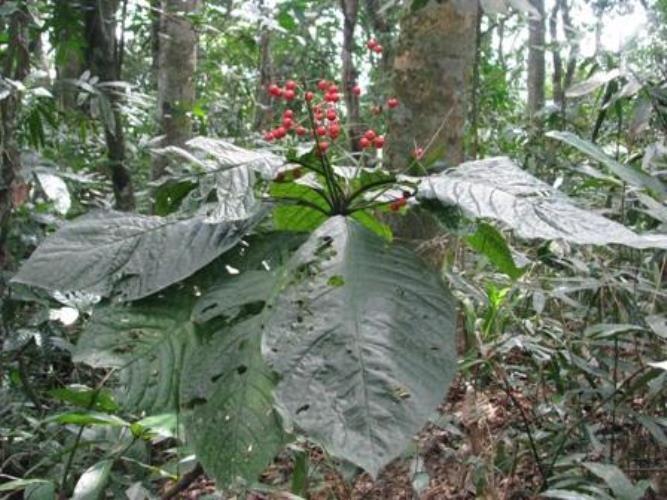 VQG Phong Nha-Kẻ Bàng khai trương điểm du lịch sinh thái rộng 40ha - ảnh 5
