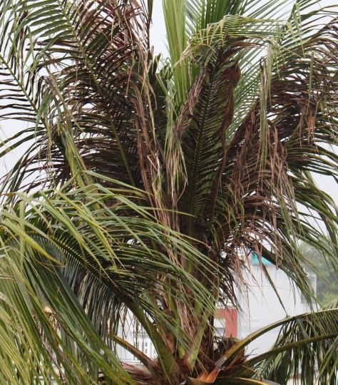 TP.HCM: Cơn mưa chiều có sấm sét dữ dội khiến nhiều người hoảng hốt - ảnh 4