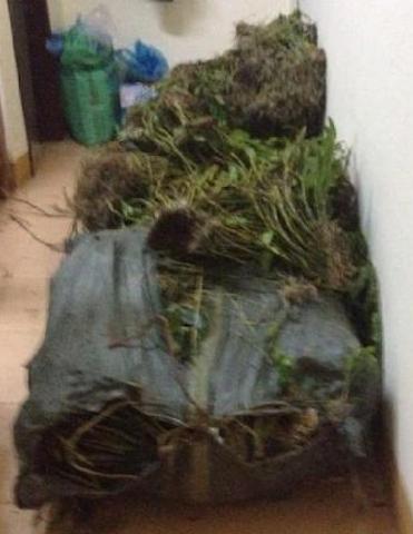 Bị bắt giữ vì vận chuyển 180 kg cây hoa Phong Lan  - ảnh 2