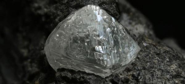 Loài cây 'sang chảnh' chỉ mọc trên đất có kim cương - ảnh 3