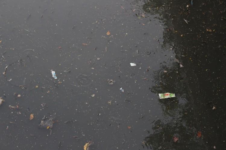 Cá thoi thóp nổi đầy trên kênh Nhiêu Lộc - ảnh 3