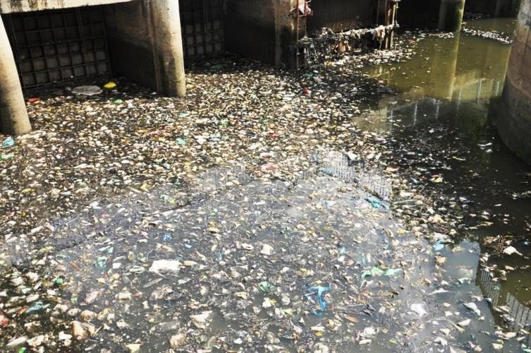 Cá thoi thóp nổi đầy trên kênh Nhiêu Lộc - ảnh 4