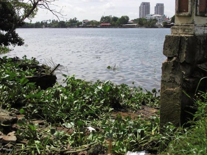 Tập thể dục, phát hiện xác chết trên sông Sài Gòn - ảnh 1
