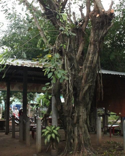 Cưa cây dưới trời mưa, một người bị điện giật tử vong - ảnh 1