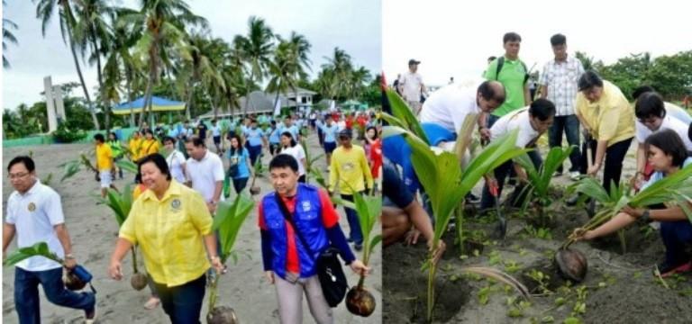 Không nên trồng dừa ở TP.HCM ? - ảnh 1