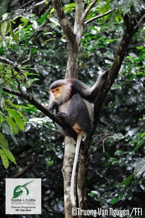 11 loài có nguy cơ tuyệt chủng tại Việt Nam - ảnh 5