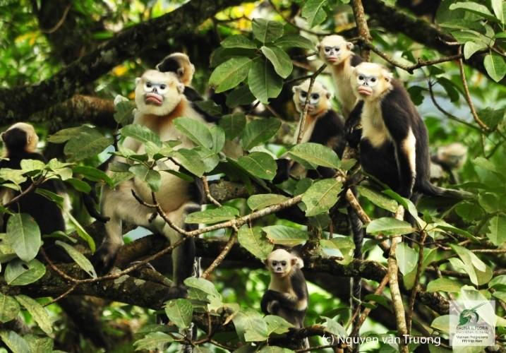 11 loài có nguy cơ tuyệt chủng tại Việt Nam - ảnh 3