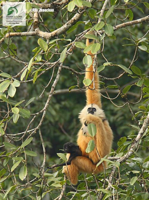 11 loài có nguy cơ tuyệt chủng tại Việt Nam - ảnh 2