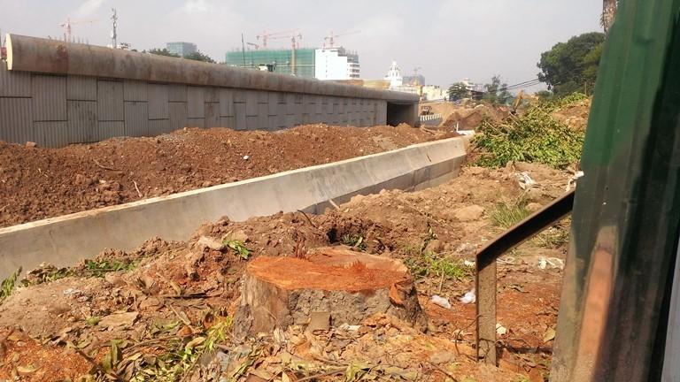 Hà Nội tiếp tục đốn hạ hàng loạt cây cổ thụ - ảnh 3