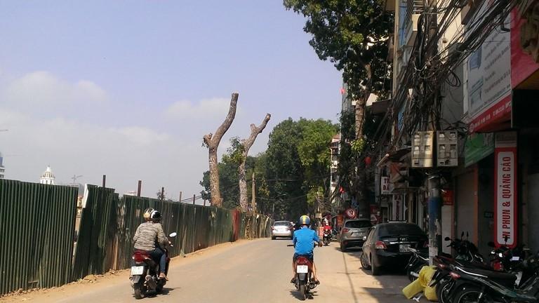 Hà Nội tiếp tục đốn hạ hàng loạt cây cổ thụ - ảnh 6