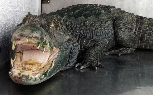Tên trộm vừa thoát được cảnh sát thì bị cá sấu ăn thịt - Ảnh 2.