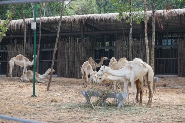 Khai trương vườn thú bán hoang dã lớn nhất châu Á  - ảnh 11