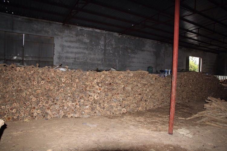 Phát hiện kho gỗ quý không rõ nguồn gốc - ảnh 1