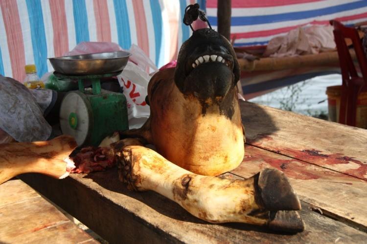Hàng trăm con bê bị giết thịt tại chợ 'bán rủi cầu may' - ảnh 4
