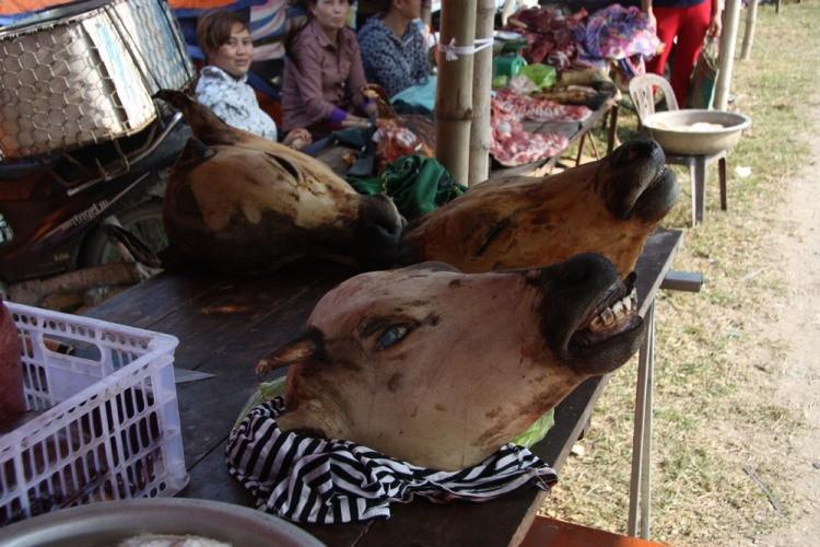 Hàng trăm con bê bị giết thịt tại chợ 'bán rủi cầu may' - ảnh 5