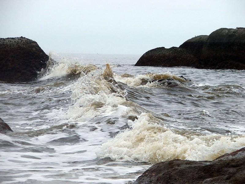 Thủy triều đỏ đã tấn công bờ biển Bình Thuận như thế nào? - ảnh 1