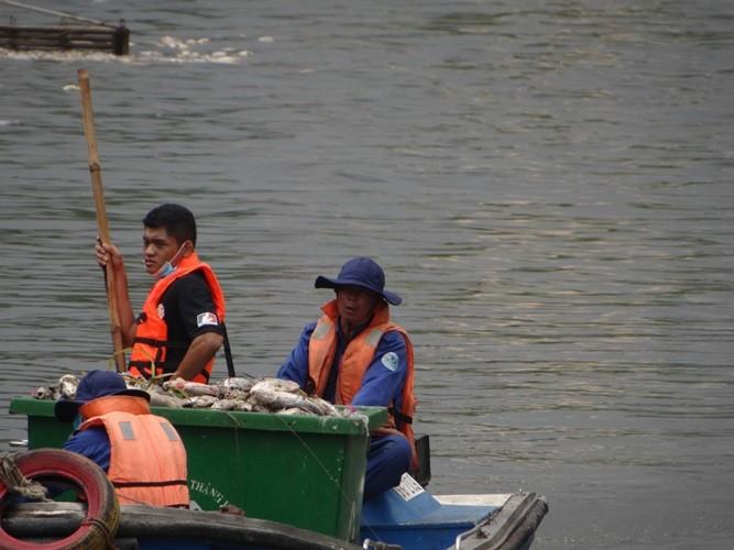 Bất ngờ với lượng cá chết hơn 70 tấn ở kênh Nhiêu Lộc - Thị Nghè - ảnh 3