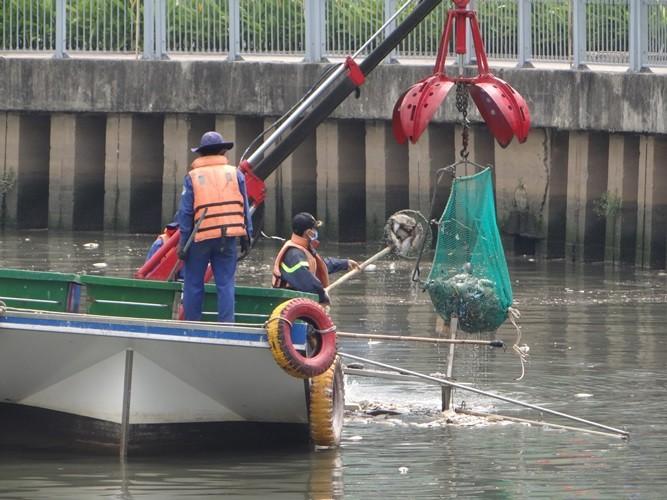 Bất ngờ với lượng cá chết hơn 70 tấn ở kênh Nhiêu Lộc - Thị Nghè - ảnh 4