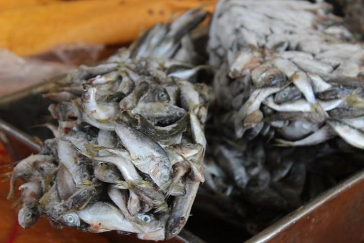 Sở Y tế lấy lại mẫu xét nghiệm vụ cá nục nhiễm phenol - ảnh 2