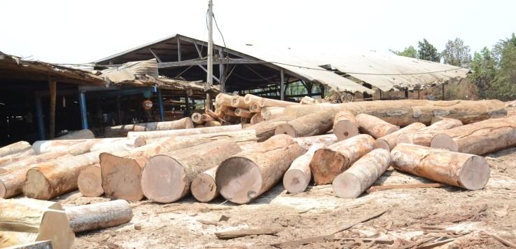 Một bãi gỗ không rõ nguồn gốc được cất giữ tại doanh nghiệp tư nhân Quốc Triệu