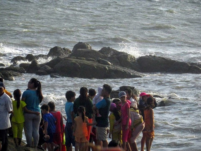 Hải cẩu xám bất ngờ xuất hiện ở biển Bình Thuận - ảnh 3