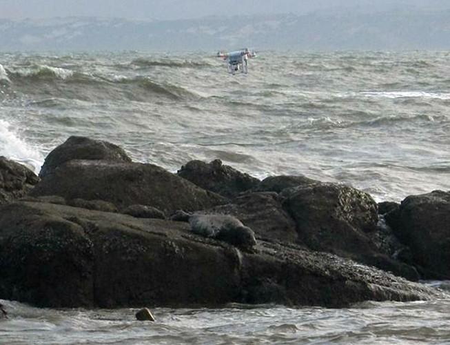 Hải cẩu xám bất ngờ xuất hiện ở biển Bình Thuận