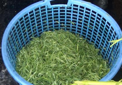 Bắt giữ hơn 1,5 tấn rau muống bào ngâm hóa chất ở Củ Chi - ảnh 1