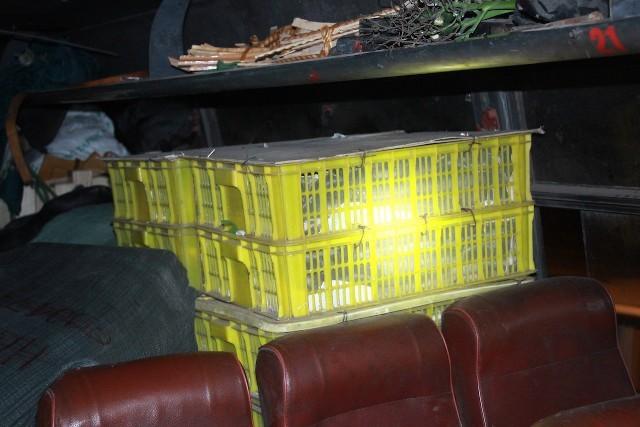 Hàng hóa cùng 15 thùng chứa rắn hổ mang được chất đầy trên các băng ghế chở khách