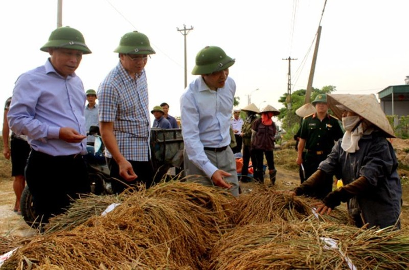 Ông Đặng Huy Hậu, PCT UBND tỉnh Quảng Ninh chỉ đạo nông dân cắt lúa sớm tránh thiệt hại trước bão số 7