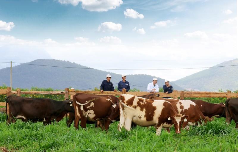 Chuẩn bị khánh thành trang trại bò sữa chuẩn Organic - ảnh 2