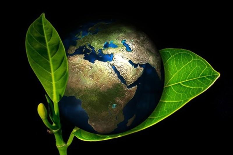 Xây dựng thế hệ trẻ yêu môi trường - ảnh 1