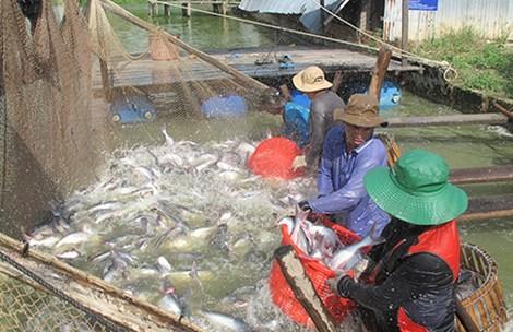 Thượng nghị sĩ Mỹ John McCain đề nghị bỏ quy định mới về cá tra - ảnh 1
