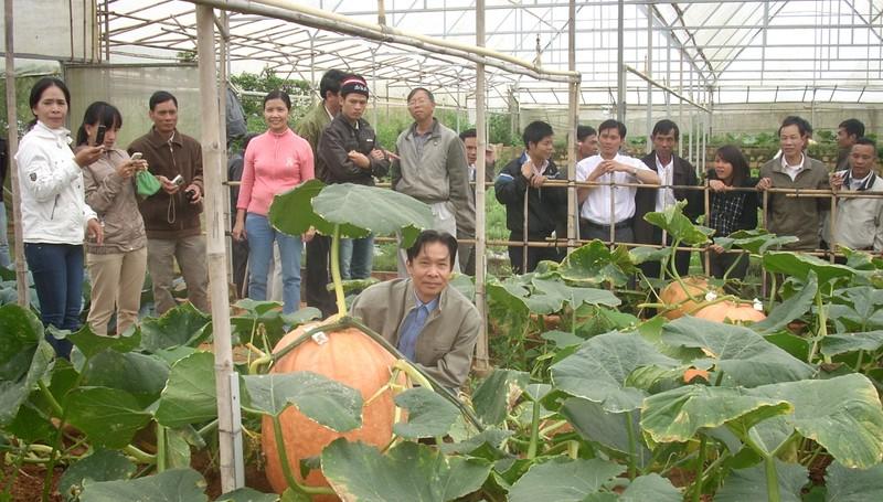 Chiêm ngưỡng những trái bí khổng lồ ở Đà Lạt - ảnh 4