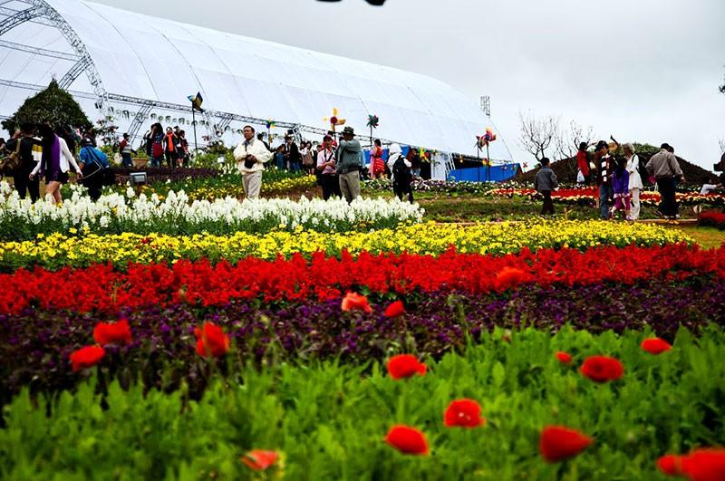 Đà Lạt 'trải thảm đỏ' đón du khách dự Festival hoa - ảnh 1