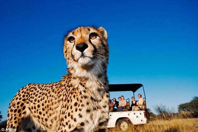 Cảnh báo nạn săn bắt động vật quý hiếm qua Facebook - ảnh 2