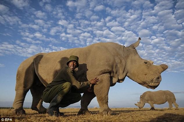 Cảnh báo nạn săn bắt động vật quý hiếm qua Facebook - ảnh 4