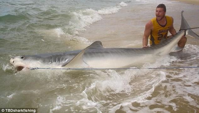 Ly kỳ chàng trai tay không bắt cá mập dài 4 mét - ảnh 1