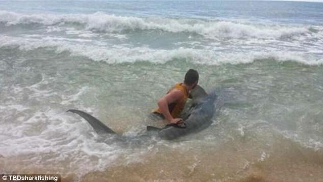 Ly kỳ chàng trai tay không bắt cá mập dài 4 mét - ảnh 3
