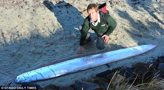 Phát hiện loài cá biển lạ dài 3 mét - ảnh 3