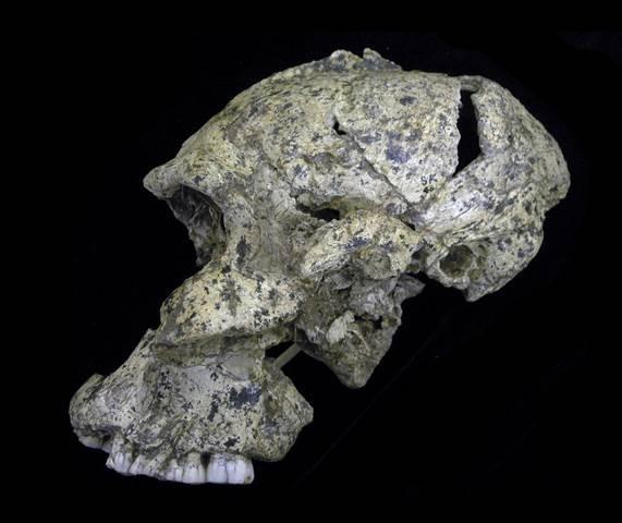 Xuất hiện hóa thạch giải mã thính lực tổ tiên loài người - ảnh 1