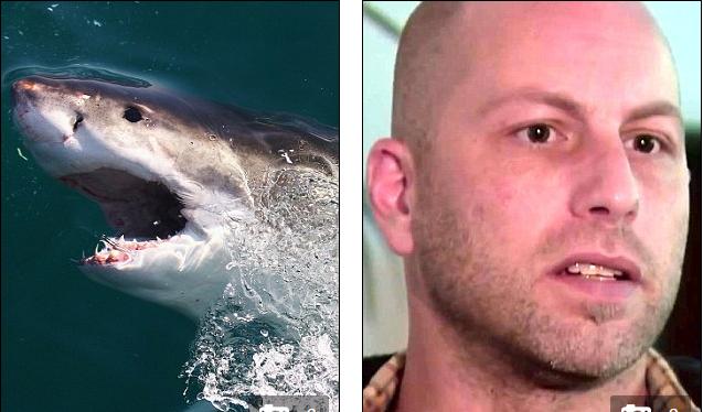 Thoát chết nhờ... bị cá mập tấn công - ảnh 1
